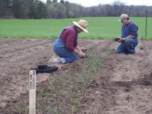 May 8th, Carol & Darwin planting onions